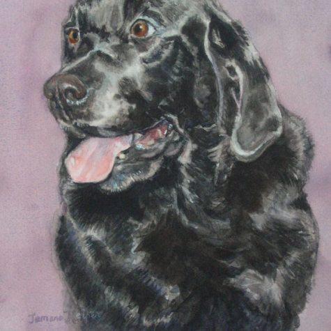 Buster (Watercolor)