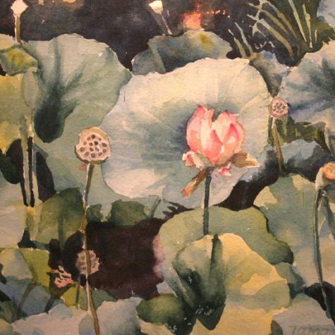 Huntington Lotus (Watercolor)