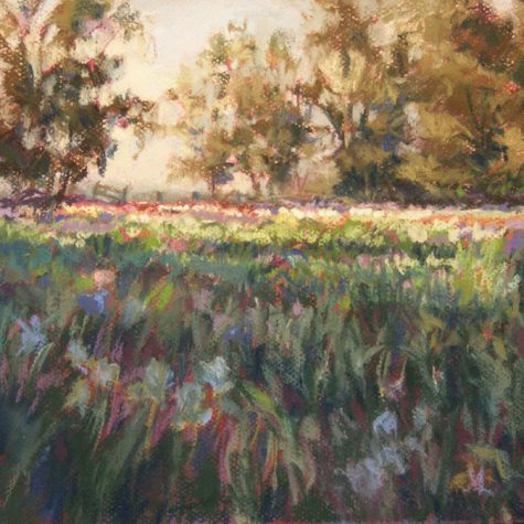 First Light in the Iris Gardens (Pastel)