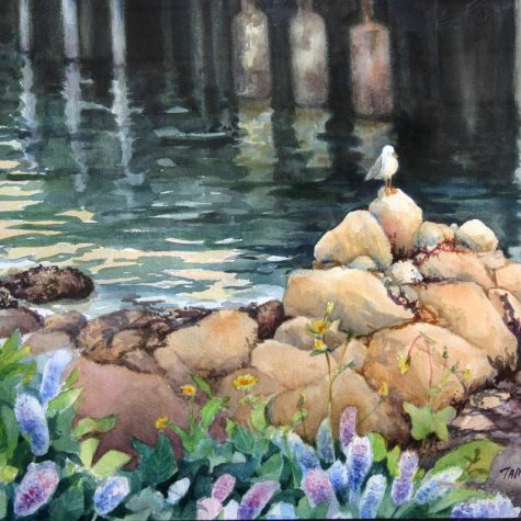 Monterey Gull (Watercolor)